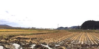 多賀多レポート-第4弾- いよいよ稲刈りです。